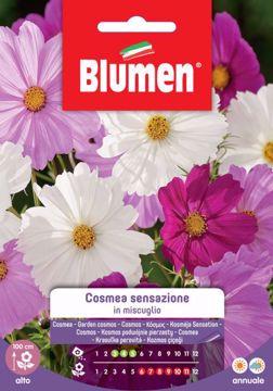 Immagine di Confezione semi Cosmea sensazione in mix Blumen fiore alto aiuole bordure pianta