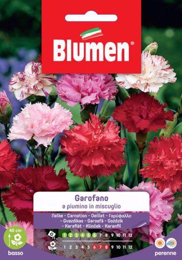 Immagine di Confezione semi Garofano a piumino in mix Blumen pianta vasi bordure decorazione