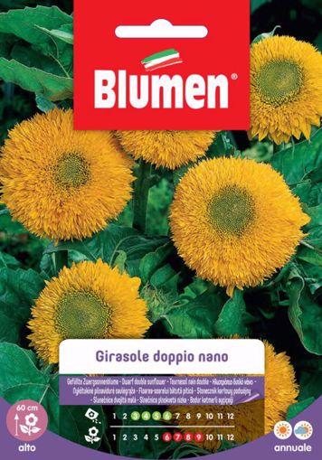Immagine di Confezione semi girasole doppio nano giallo Blumen pianta per giardino e vaso
