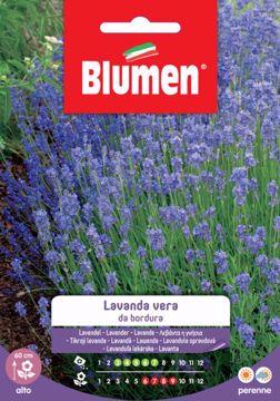 Immagine di Confezione semi Lavanda Vera da bordura Blumen pianta giardino roccioso vialetto