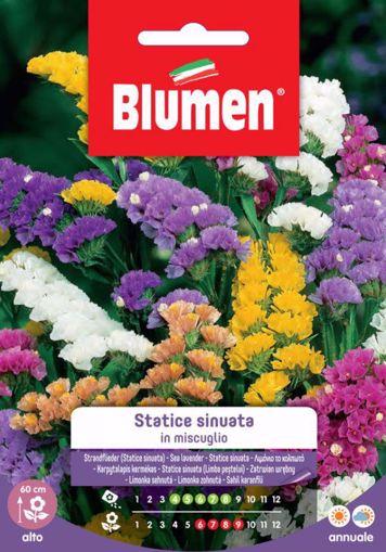 Immagine di Confezione Statice sinuata in mix Blumen aiuole giardino bordure vaso decorativa