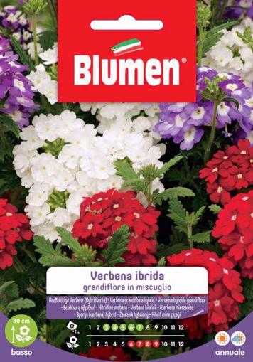 Immagine di Confezione semi Verbena Ibrida Grandiflora in mix Blumen aiuole giardino vaso