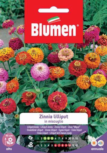 Immagine di Confezione semi Zinnia Lilliput in mix Blumen aiuole giardino bordure vaso