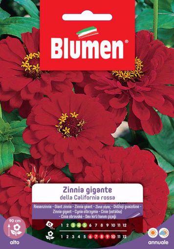 Picture of Confezione semi Zinnia gigante California Blumen aiuole giardino bordure vaso